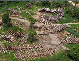 20140613185820-deforestacion-quimbo.jpg