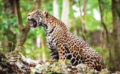 20201224131947-jaguar-2.jpg